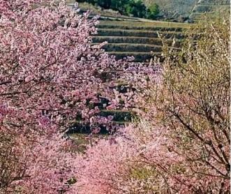 amend-flores2