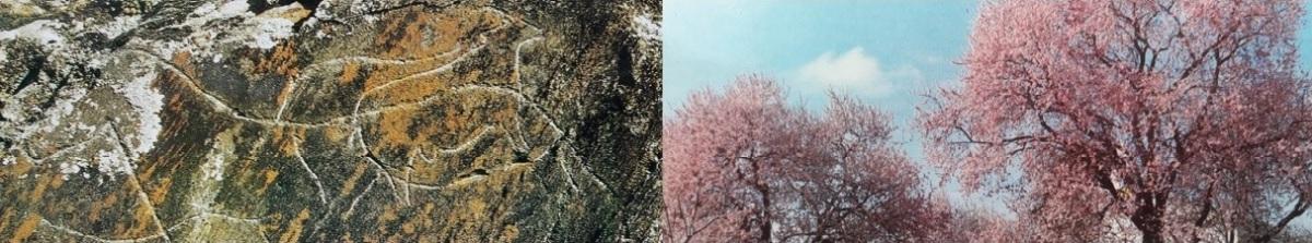 Aqui e Ali a natureza anuncia a primavera – Vila Nova FozCôa