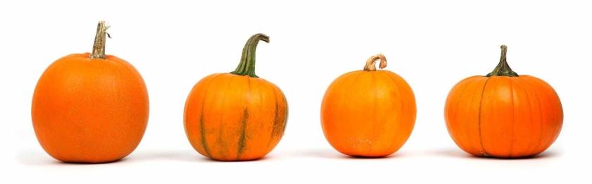 autumn-decoration-fall-food-41964.jpeg