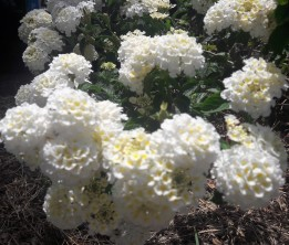 flores2