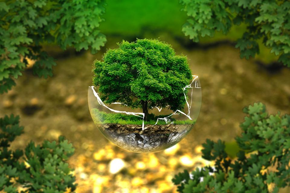 O Projeto CompostAgem: Aprender com a Natureza – Em votação noOPP