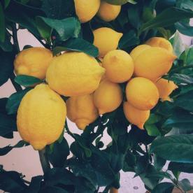 limão-1432457990754-c8b5f21448de